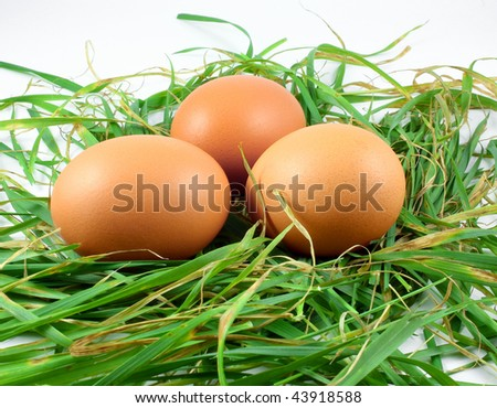 eggs in grass on white