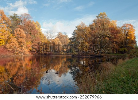 Etude in crimson tones. Autumn landscape with a pond, trees and ducks.