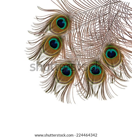 feather of peacock on a white background - stock photo