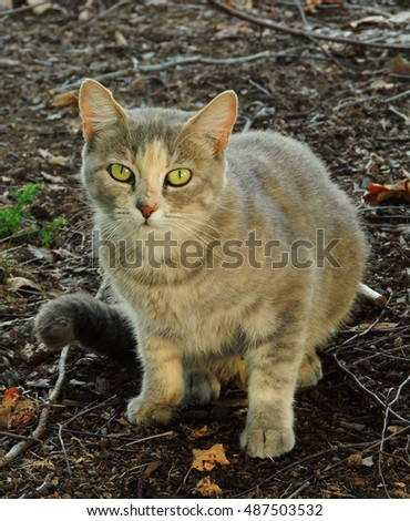 feral cat at lake of the ozarks, Missouri