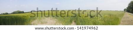 Field Panorama - stock photo