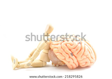 Flexible wooden doll and human brain
