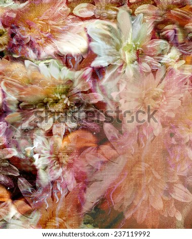 Floral background with stylized grunge striped  chrysanthemums    - stock photo
