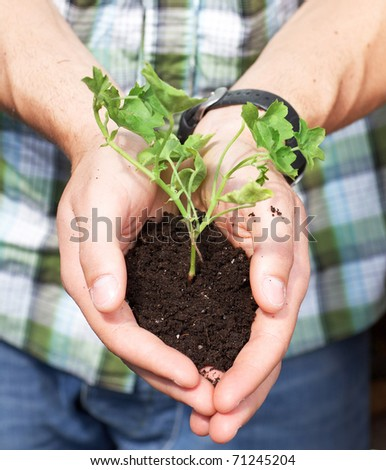 florist man holding soil in his hands - stock photo
