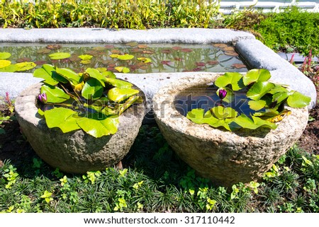 flower and green leaves in two cement flowerpot on sunshine day - stock photo