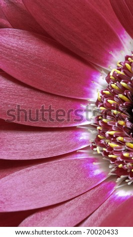 flower closeup - stock photo