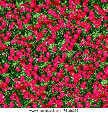 flower garden  seamless - stock photo