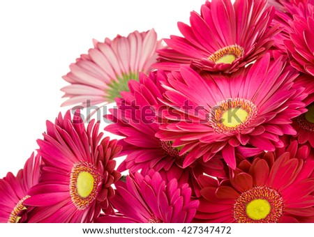 Flower gerbera bouquet isolated on white background