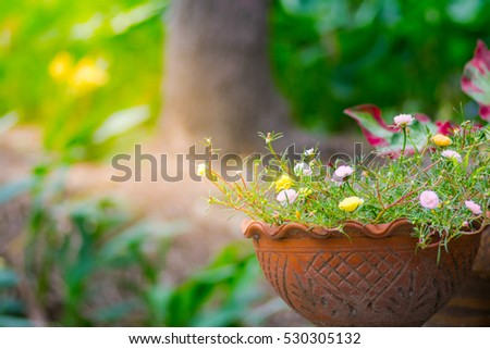 Flower Portulaca oleracea background in a pot with warm light.