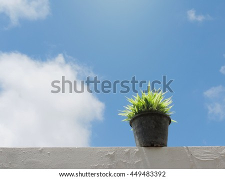 Flowerpots and house plants on the balcony,small plant in a pot on sunny day with blue sky background.          - stock photo