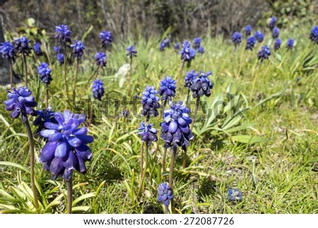 flowers in spring on a rock - stock photo