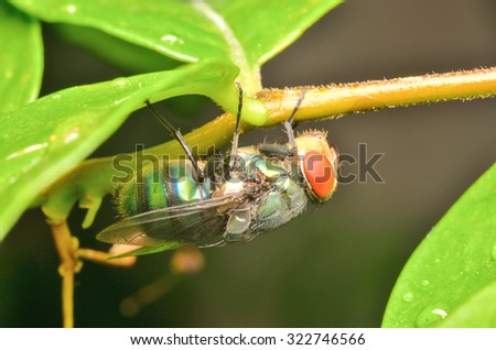 fly on a green leaf