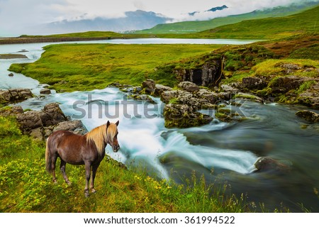Foggy day in Iceland. On the shore of waterfall Icelandic horse grazing.  - stock photo