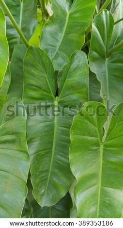 Foliage and Plant abstract ,soft focus,blurred - stock photo
