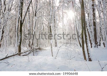 Forest after snowfall with sunbeam - stock photo