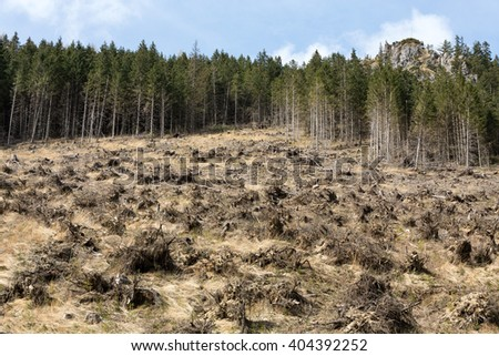 Forest being cut down turning into a dry lifeless field - stock photo