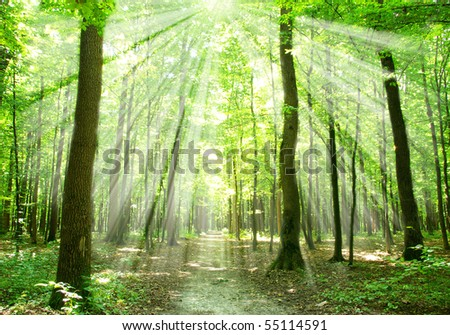 forest sunlight - stock photo