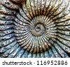 Fossil of Ammonite in the stone - stock photo