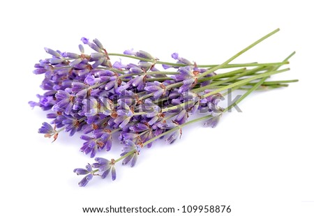 fragrant lavenders on a white background - stock photo