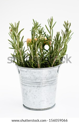 Fragrant rosemary stands in a small iron bucket