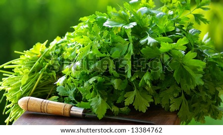 Fresh coriander (cilantro) herb and knife - stock photo