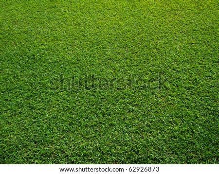 Fresh Green Grass Texture and surface - stock photo