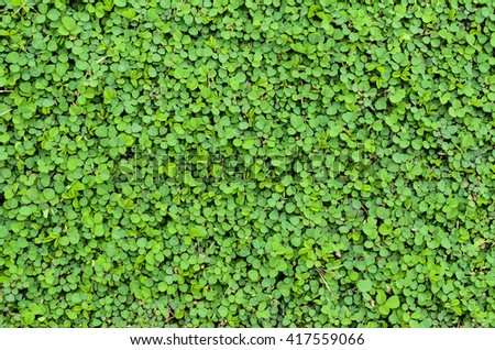 Fresh green leaves.Green background with leaves. - stock photo