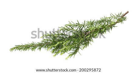 fresh rosemary branch isolated on white background - stock photo