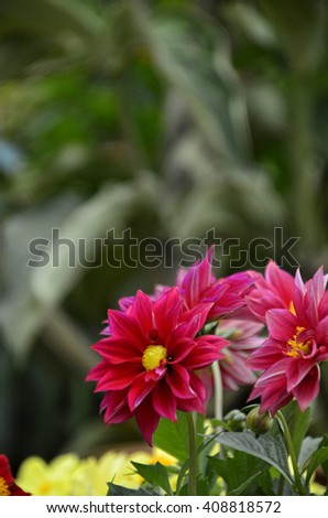 Fresh unknown red flower  (soft focus ) - stock photo
