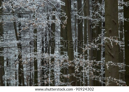Frosty bee-chen trees with branchs - stock photo