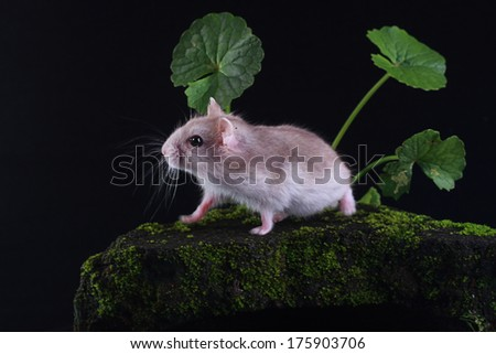 funny hamsters - stock photo