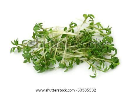 Garden cress isolated on white background - stock photo