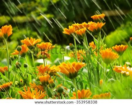 Garden Flowers In Rain Summer Flower Background Natural Backgrounds