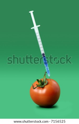'genetically-modified' tomato receiving an injection of chemicals - stock photo