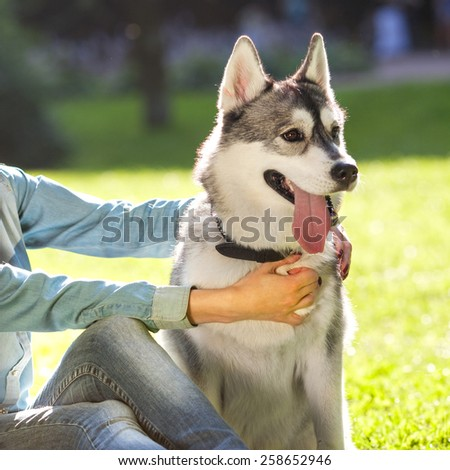 girl in the park their home with a dog Husky  - stock photo