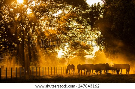Golden Light in the stables - stock photo