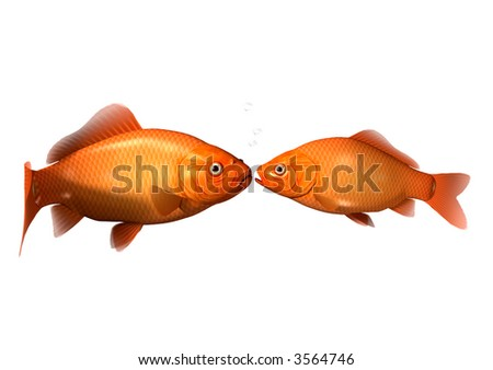 2 Goldfish Kissing - stock photo