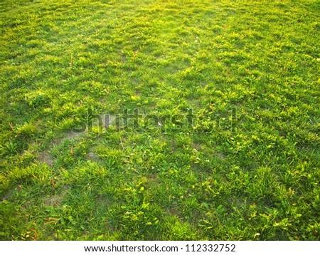 Grass field background - stock photo