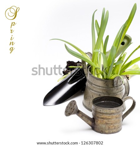 Grass in a flowerpots, watering can and garden tools isolated on white - stock photo