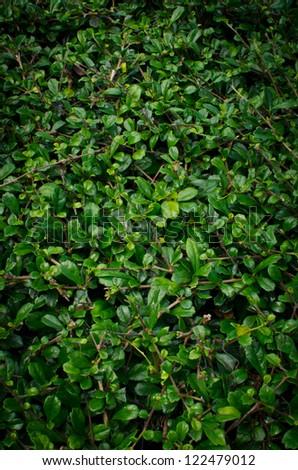 Grass leaf background - stock photo
