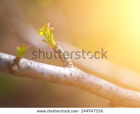 Green bud in spring. Selective focus with shallow depth of field.  - stock photo
