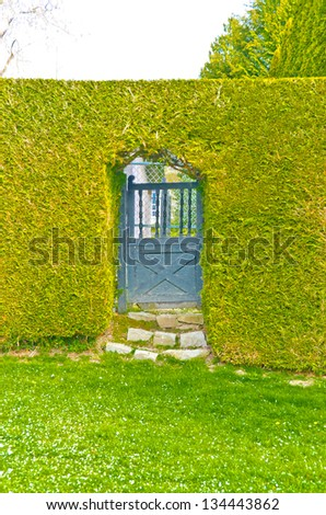 """Green fence ' from evergreen plants and rustic gate ( wicket ) to the front ( back ) yard.   dividing the street and private property. Keeps privacy and security. Landscape trimming design. - stock photo"