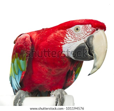 Greenwing Macaw Isolated on White Background - stock photo