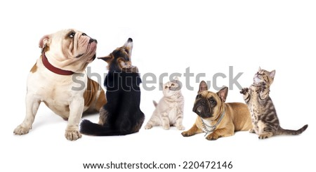 group  of dogs and  cat  look upin white background  - stock photo