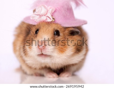 Hamster wearing hat - stock photo