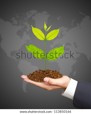 hands holding a green young plant. Symbol of spring and ecology concept - stock photo