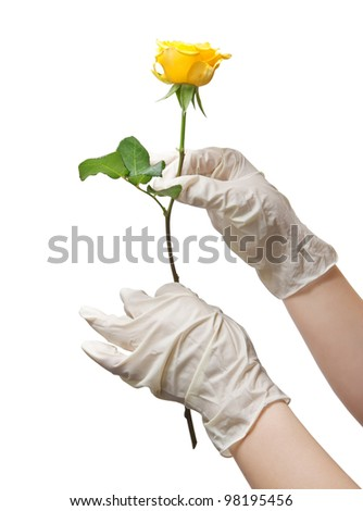 Hands of a doctor in a sterile gloves holding a rose - stock photo