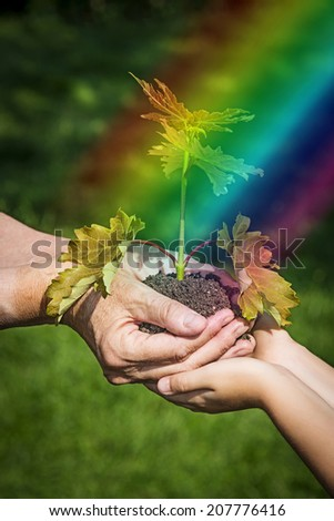 hands with a little tree - an ecology concept