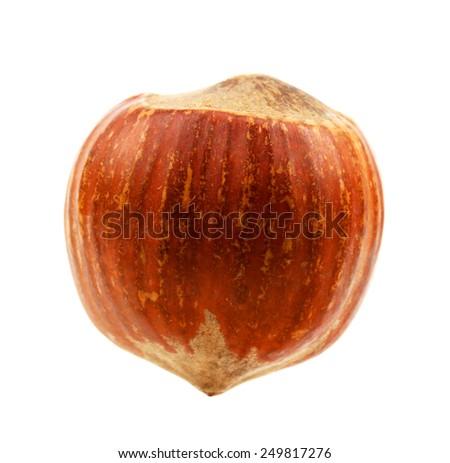 hazelnut on a white background - stock photo