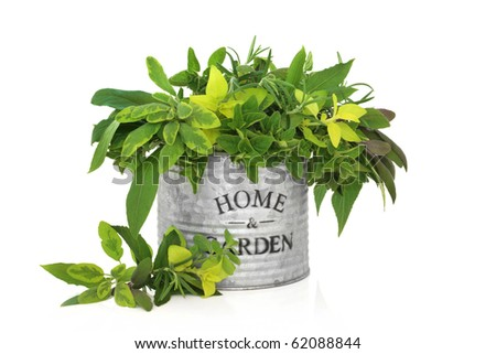 Herb leaf mixture in an old aluminum can with the words home and garden, including rosemary, mint and bay and varieties of oregano and sage, isolated over white background. - stock photo